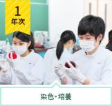 感染・免疫基礎実習