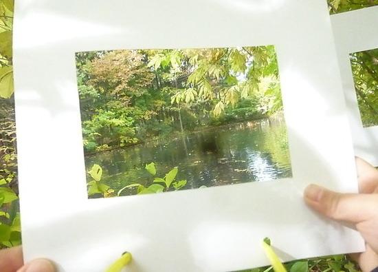 秋を見つけに 年長 円山公園遠足