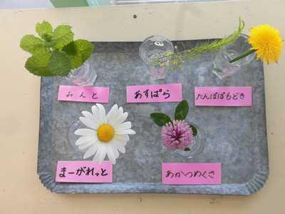 *花を生ける活動*