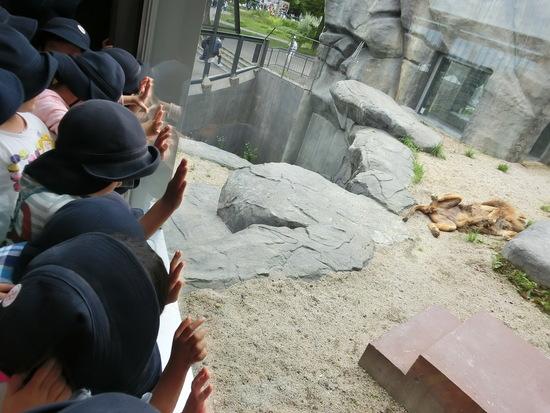 ~円山動物園~ くり(年中)