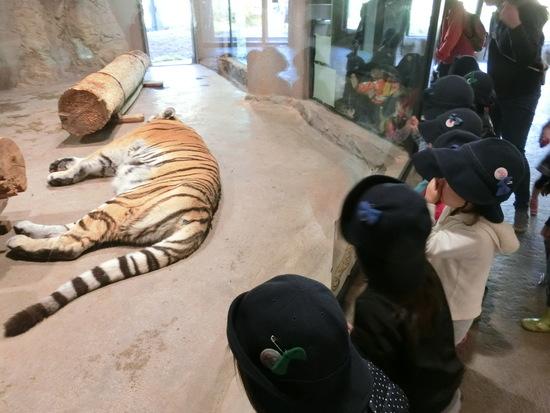 さくらんぼグループ ~円山動物園~