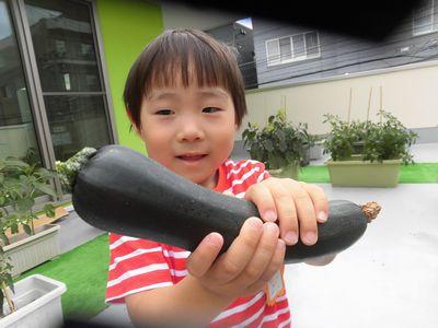 *野菜収穫*