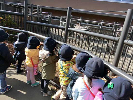 さくらんぼ1・3グループ 円山動物園遠足